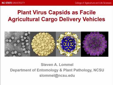 Plant virus based nanoparticles and non-woven matrices