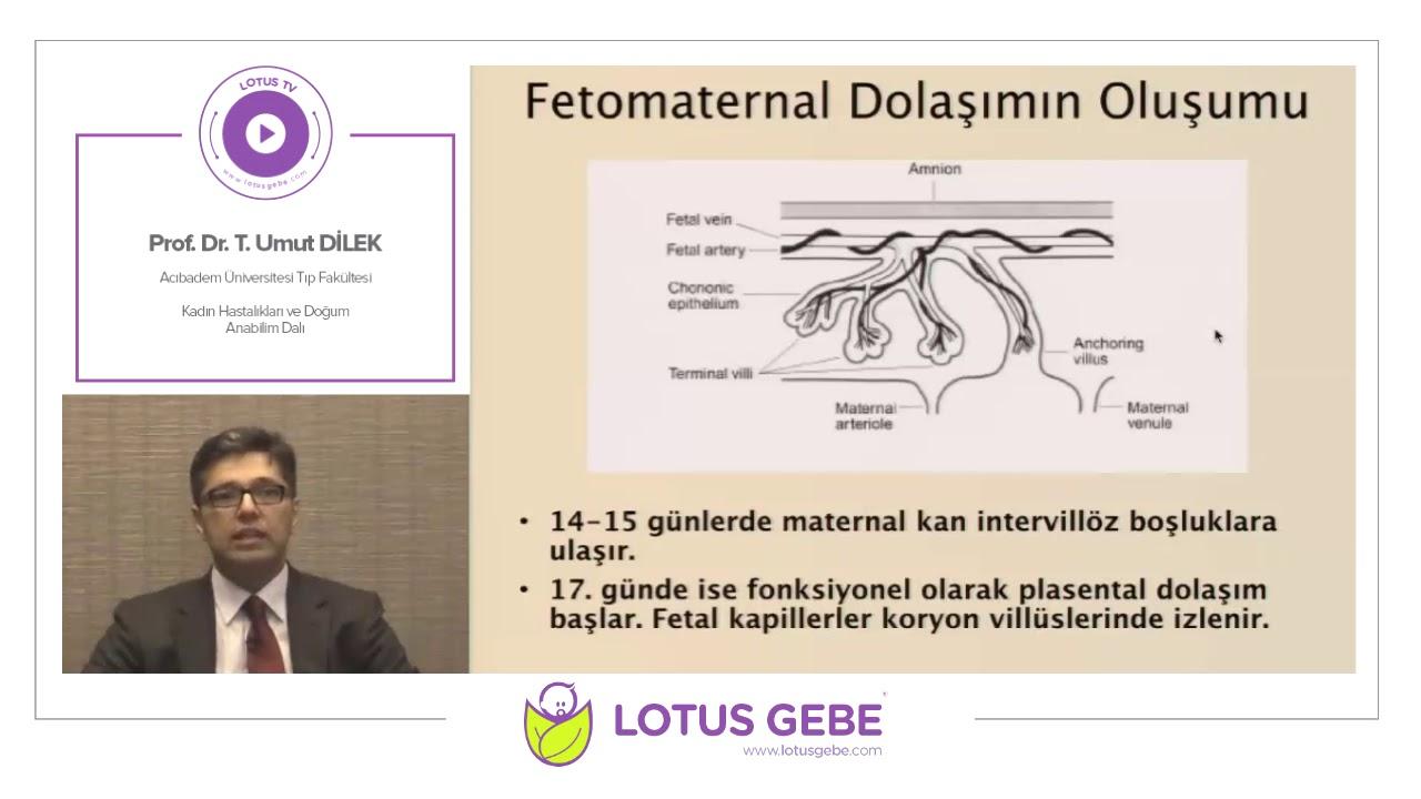 Prof. Dr. T. Umut Dilek - Fetoplasental Gelişim ve Fizyoloji