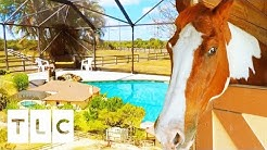 Millionaire Couple Explore $649K Florida Home With Lavish Horse Stables | My Lottery Dream Home