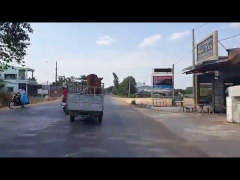 Xe chở bò Tây Ninh
