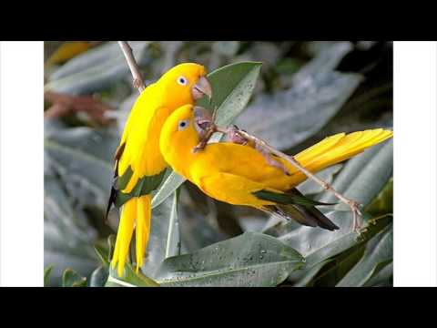 beautiful-love-birds-images