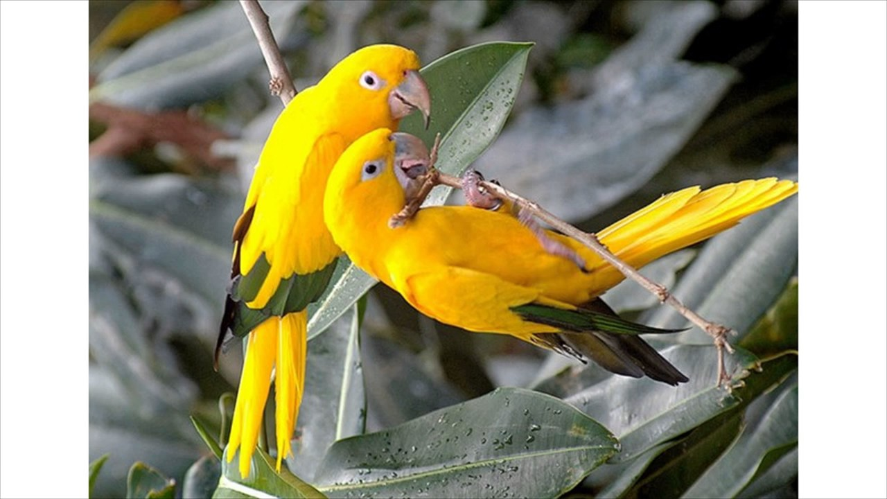 Beautiful Love Birds Images