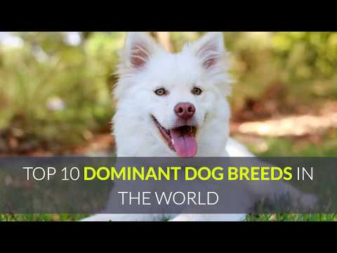 TOP 10 DOMINANT DOG BREEDS IN THE WORLD