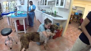 История собаки Шеридан, потерявшей ногу в борьбе с раком