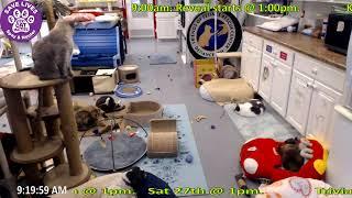 Friends of Feline Rescue Center