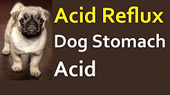 Acid Reflux In Dogs - Acid Stomach In Dogs