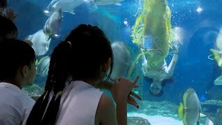 Trung Tyt chơi thủy cung Vinpearl Aquarium❤Times City♥️video clip funny kids songs♥amazing♥discovery