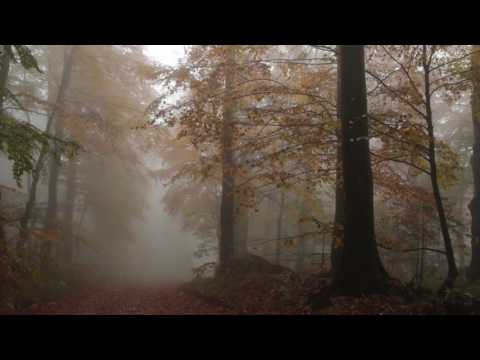 Relaxing Autumn Forest / Leaves Falling From Trees, Fog and Rain in Colorful Forest / 8 Hours