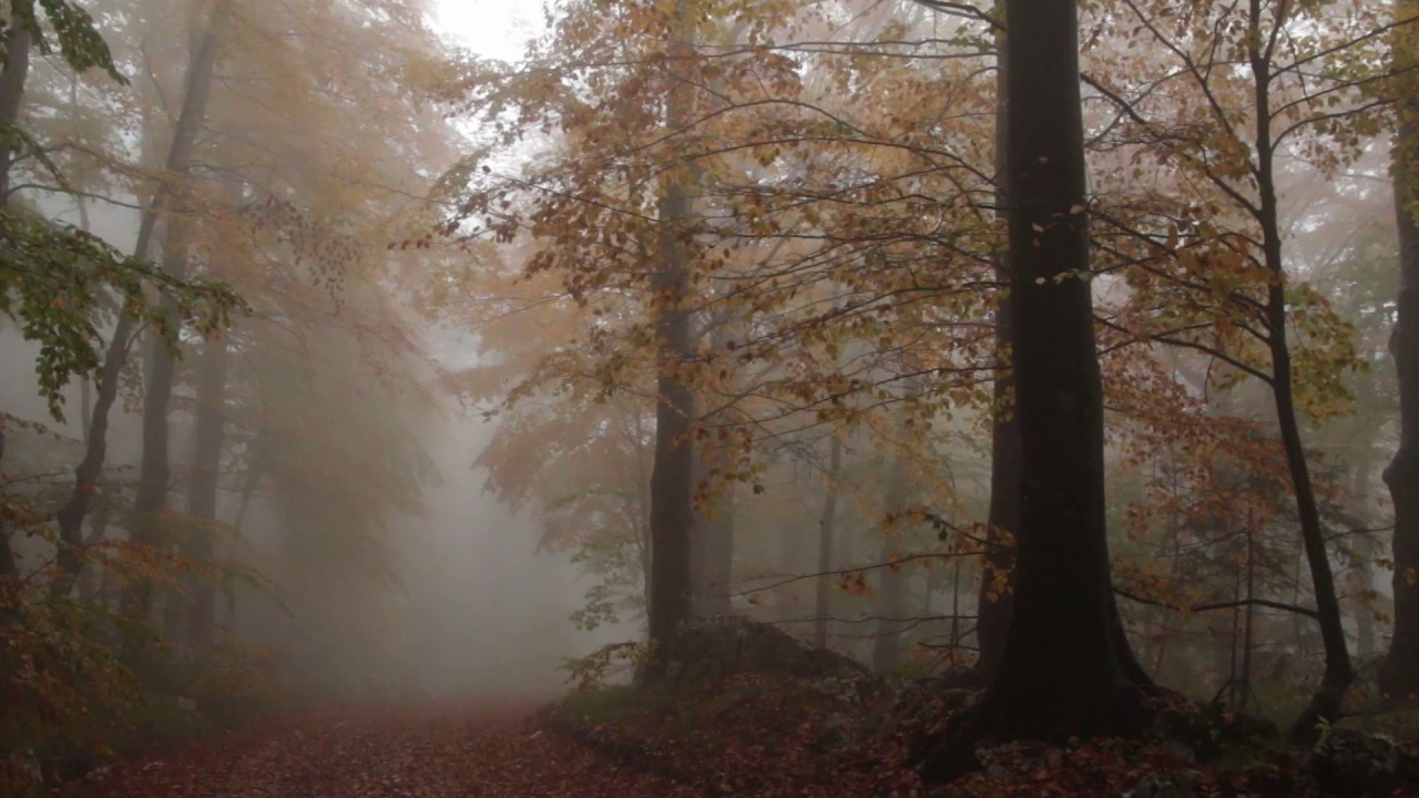 Relaxing Autumn Forest / Leaves Falling From Trees, Fog ...