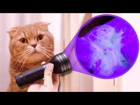 고양이 오줌 싼 곳을 찾는 신기한 방법!