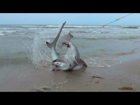 BlackTip Shark Fishing, What We Do For One Shark 4/4 Hammer Head!
