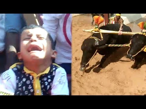 Kambala: Child salvaged by a whisker from a frenzied bull