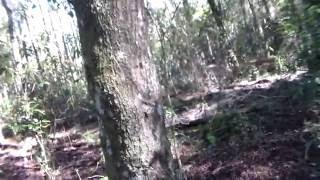 Skunk Ape filmed in Florida watershed