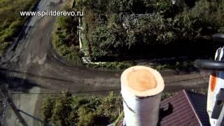 видео валка деревьев частями в Ленобласти