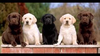 le migliori 10 razze di cani per l