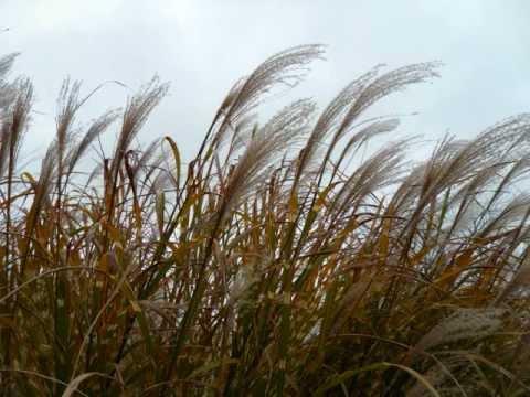 Wind Chimes - 29 Inch Corinthian Bells C.wmv