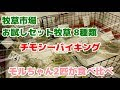 【モルモット】チモシーバイキング【Guineapig】 の動画、YouTube動画。