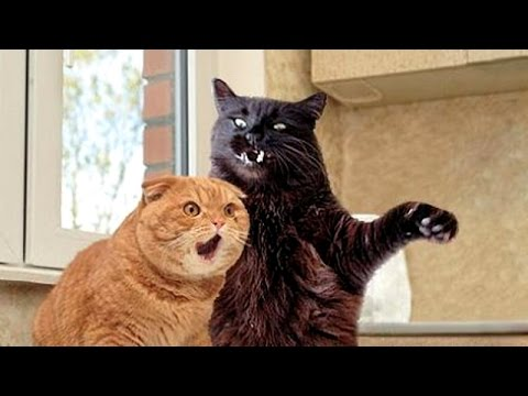 Cats Win The Most Hilarious Animals Prize!