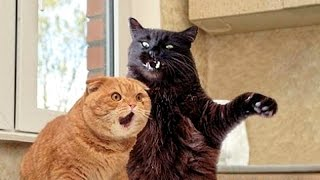 Download Cats, funniest creatures in animal kingdom - Funny cat compilation Mp3 and Videos