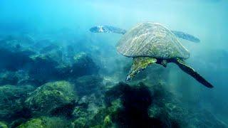 JTM - HAWAII (Oahu, Maui)-(Drones, Turtles, Surfing, Exploring)