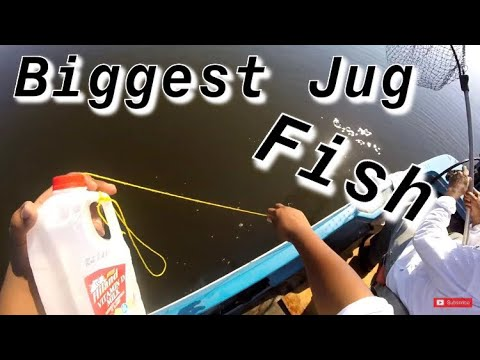 Jug Fishing! Our Biggest Jug Catch! Crappie Fishermen! Jug Lines Lining! Catfish