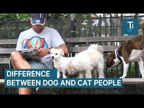 The differences between dog people and cat people