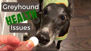 Greyhound Health Issues