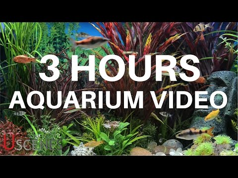 3 Hour Aquarium  by Uscenes: FREE TV SCREENSAVER
