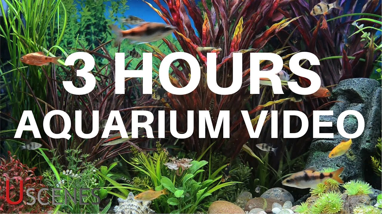 Fish Tank 3d Live Wallpaper For Pc 3 Hour Aquarium Video By Uscenes Free Tv Screensaver