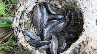 Primitive Technology: Catch fish by deep hole - Cooking fish sour soup recipes