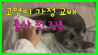고양이 가정 교배 출산 전 징후 증상!