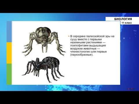 11 класс - РУ - Биология - №4 - Исторические развитие органического мира на Земле