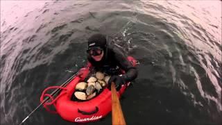 подводная охота в норвегии собираем гребешка 2015.