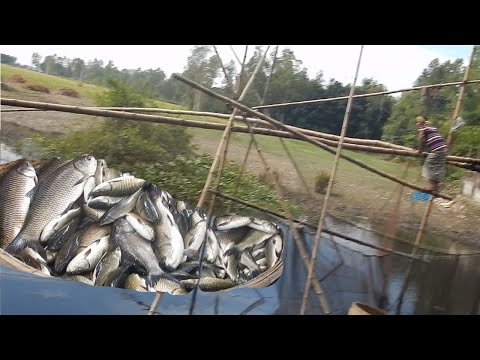 MOST AMAZING TECHNOLOGY! PREVIOUS TRAP VS NEW FISHES