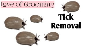 How to Properly Remove A Tick