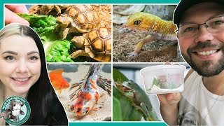Day In The Life // New Baby Tortoise & Feeding My Pets