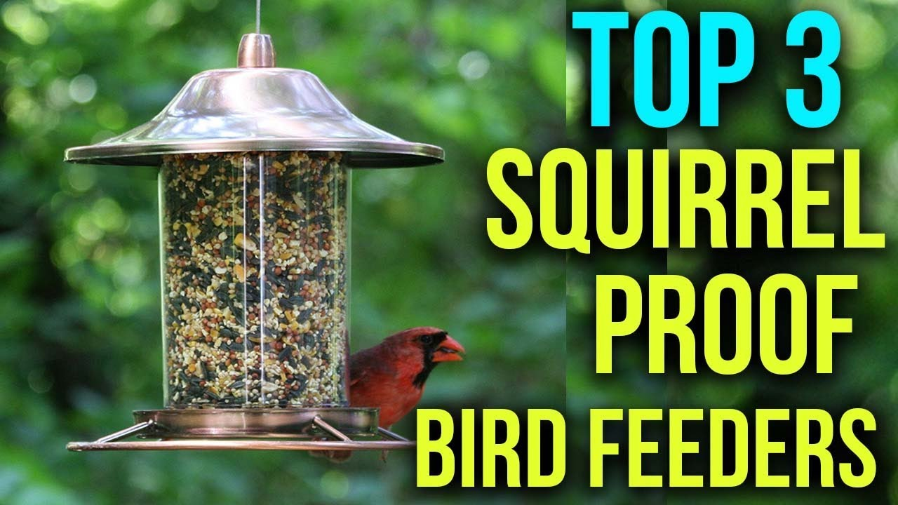 squirrel watch youtube bird feeder to how proof