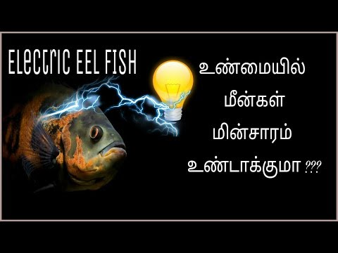 Electric eel | electric fish | producing 600V current | Tamil