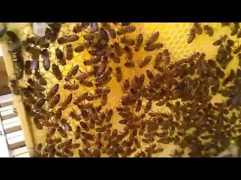 Что сделать чтобы пчелы не роились Своими руками - Как сделать самому 94
