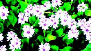 Shono ekti Mujiborer theke - Aungshuman Roy