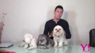 Shampoo Y Acondicionador Para Perros - Yasmany