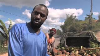 Jamaican Yellow Yam — D,yam Economics, Jamaica 101
