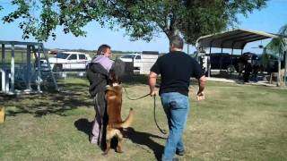 Us K9 Unlimited Dog Training Academy Wodan .mp4