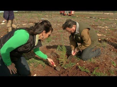 Journey of Restoration #3: Reforestation and Revelation