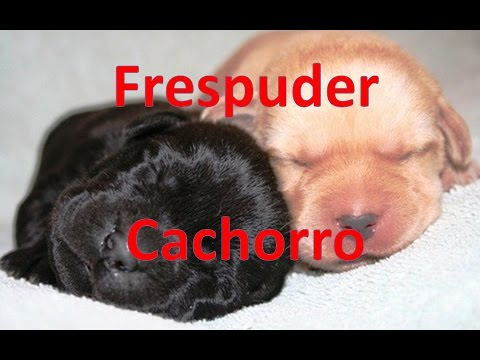Parto De Perros Frespuder Cachorros Recién Nacidos Youtube