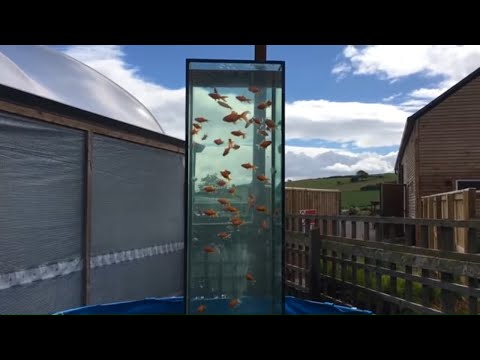 Selection Of Inverted Aquarium / Upside Down Fish Tank Designs & Ideas