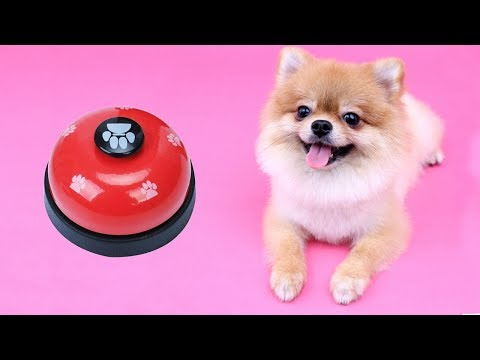 dog-reacts-to-dog-training-bell