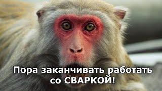 Мемы с животными! Часть 1