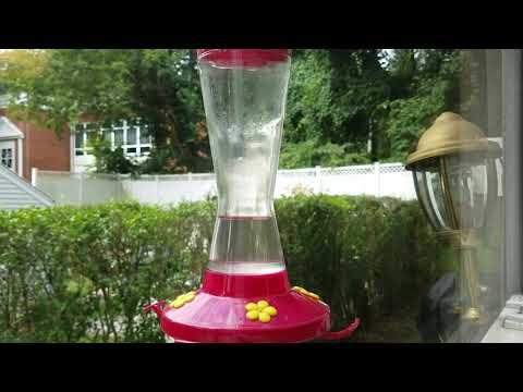 Hummingbird Visitor