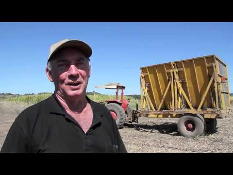Tweed Sustainable Agriculture Strategy  farmer case studies - Sugar